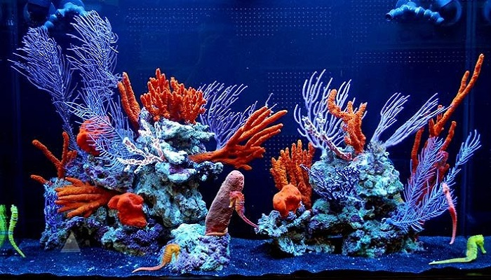 Seahorses Care- How to start a saltwater fish tank for seahorses