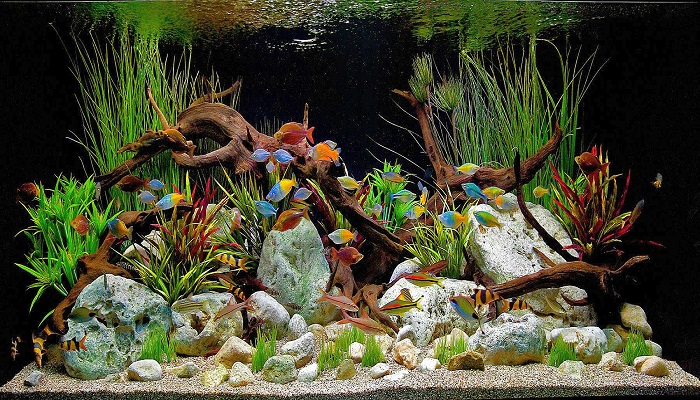 Tropical freshwater aquarium fish tank total care guide