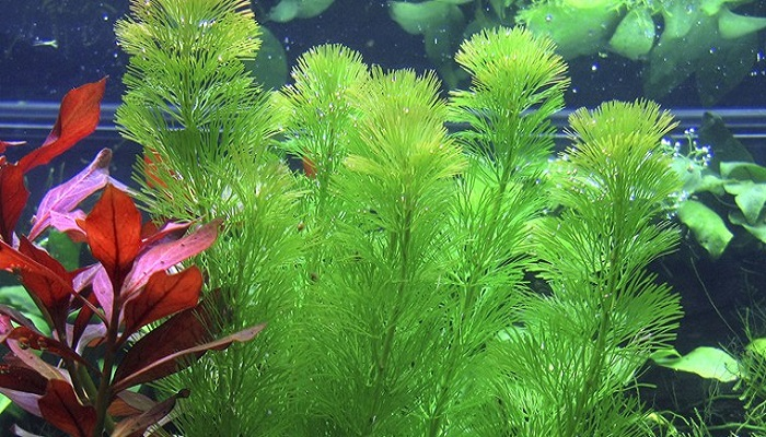 5 Best Freshwater Aquarium Plants Guide for Beginners