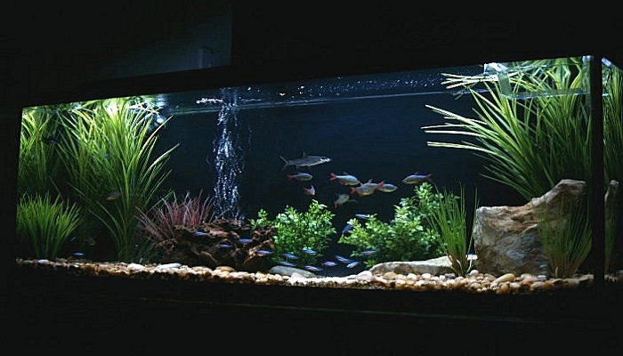 Tropical freshwater aquarium fish tank total care guide for Freshwater aquarium fish list