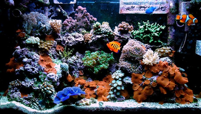 How to set up a saltwater fish tank for keep your for How to keep fish tank clean without changing water