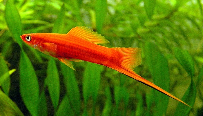 Top 5 Best Tropical Fish for Beginners