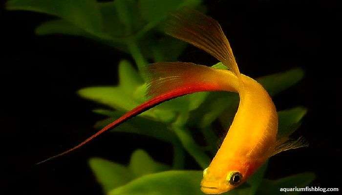 10 Best Tropical Aquarium Fish for Beginners: Tropical fish care tips