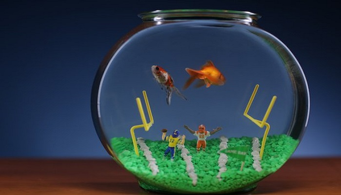 Fish Bowl Aquarium Care- How to maintenance your fish bowl?