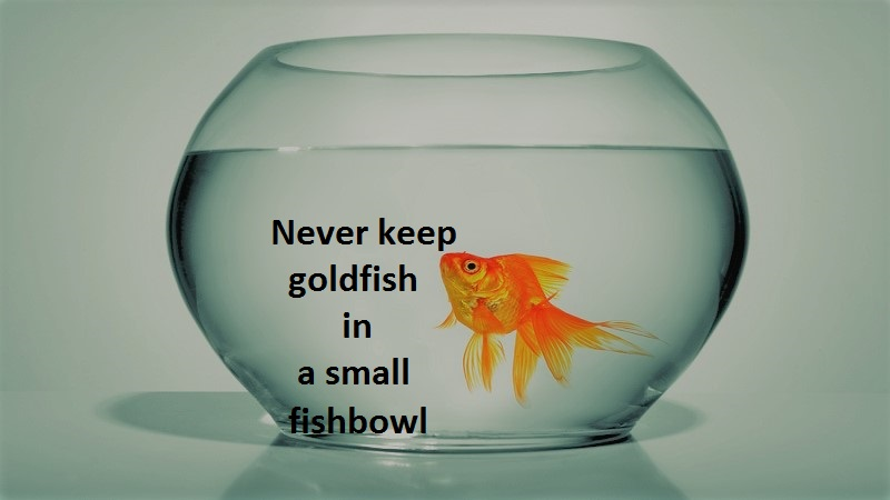 mistakes of beginners make with goldfish